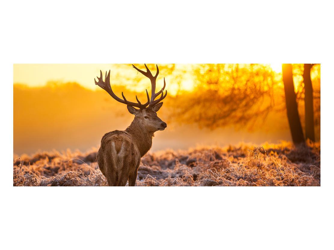 Slika jelena (K011281K10040)