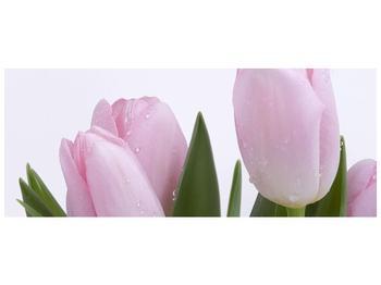 Obraz růžových tulipánů (F000389F10040)