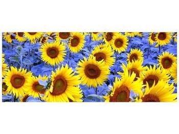 Obraz slunečnic (F000619F10040)