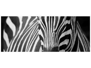 Obraz černobílého detailu zebry (F000715F10040)