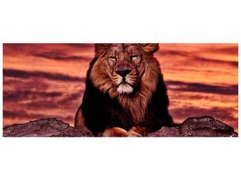 Obraz krále zvířat (F001507F10040)