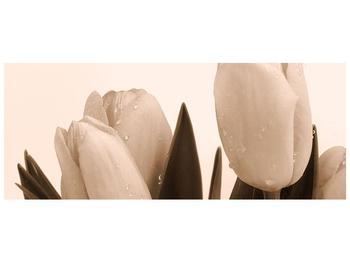 Krásný obraz tulipánů (F001883F10040)