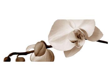Krásný obraz bílé orchideje (F001900F10040)