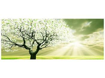 Obraz stromu na jaře (F002291F10040)