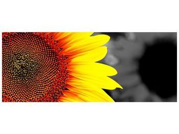 Obraz květu slunečnice (F002400F10040)
