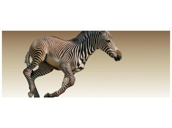 Obraz běžící zebry (F002416F10040)
