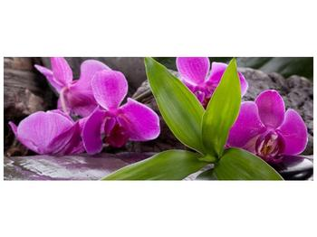 Obraz fialových orchidejí s listím (F004027F10040)