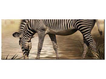 Obraz zebry (K011110K10040)