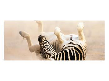Obraz ležící zebry (K011173K10040)