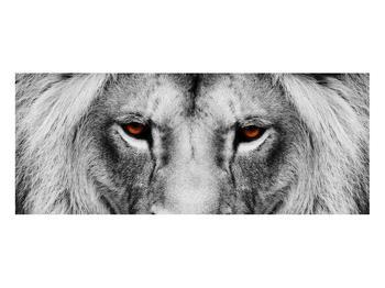 Černobílý obraz lva (K011390K10040)