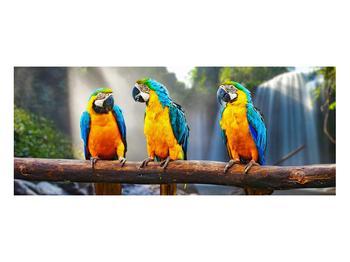 Obraz papoušků (K011994K10040)