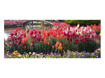 Obraz kvetín (K012048K10040)
