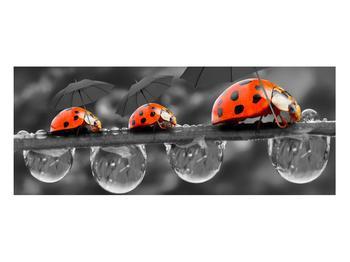 Obraz lienok sedembodkových s dáždnikmi (K012059K10040)