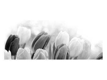 Černobílý obraz pučících tulipánů (K012127K10040)