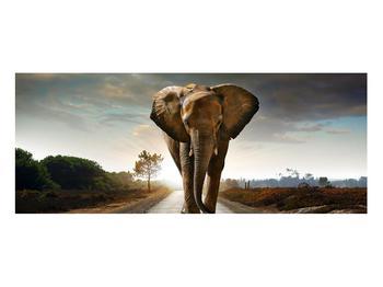 Tablou cu elefant (K012479K10040)