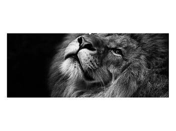 Černobílý obraz lva (K012767K10040)