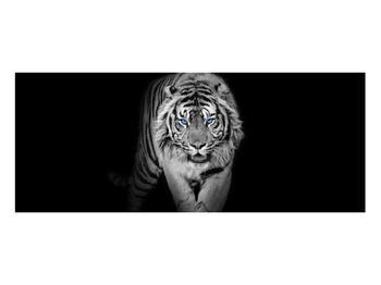Obraz tygra (K014968K10040)