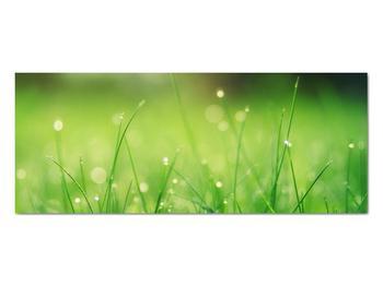 Obraz - rosa na tráve (V020169V10040)