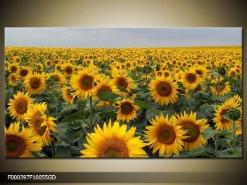 Obraz slunečnicového pole (F000397F10055GD)