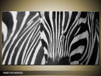 Obraz černobílého detailu zebry (F000715F10055GD)