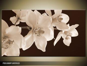 Krásný obraz bílých květin (F001888F10055GD)