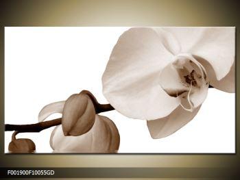 Krásný obraz bílé orchideje (F001900F10055GD)