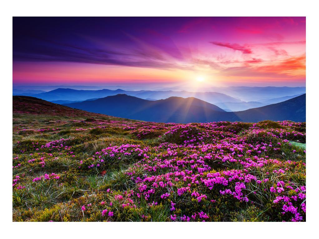 Slika planinskog rascvijetalog krajolika (K011322K10070)