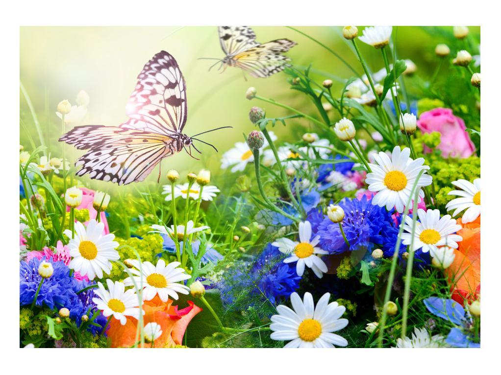 Slika poletnih cvetov z metuljem (K012220K10070)