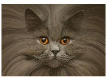Obraz kočičí hlavy (F001132F10070)