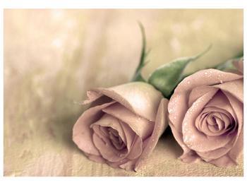Obraz jemných růží (F001212F10070)