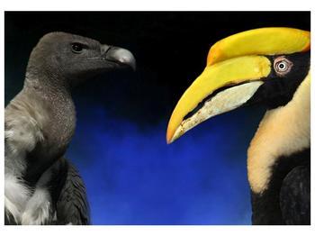 Obraz ptačích zobáku (F001358F10070)