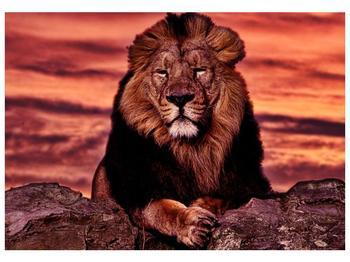 Obraz krále zvířat (F001507F10070)