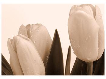 Krásný obraz tulipánů (F001883F10070)