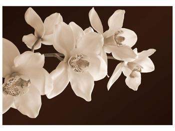 Krásný obraz bílých květin (F001888F10070)