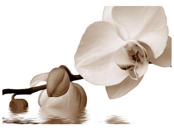 Krásný obraz bílé orchideje (F001900F10070)