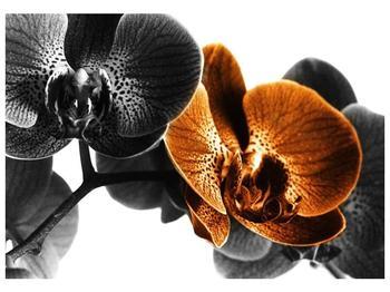 Obraz žluté orchideje (F002057F10070)