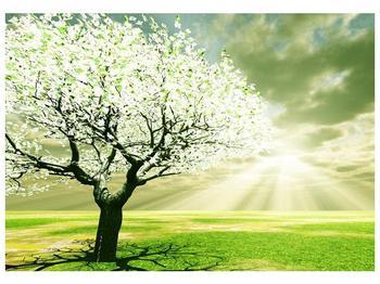 Obraz stromu na jaře (F002291F10070)