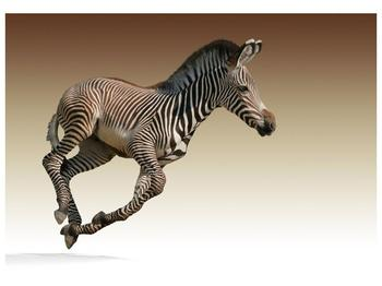 Obraz běžící zebry (F002416F10070)