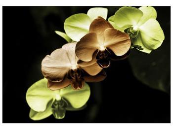 Obraz hnědých a zelených orchideí  (F002723F10070)