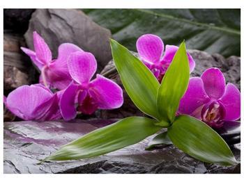 Obraz fialových orchidejí s listím (F004027F10070)