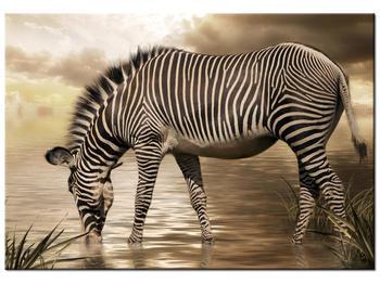 Obraz zebry (K011110K10070)