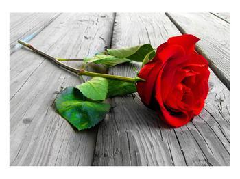Obraz červené růže (K011140K10070)