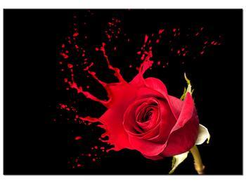 Obraz ruže (K011216K10070)
