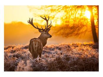 Obraz jelena (K011281K10070)