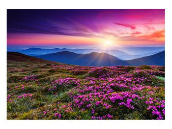 Obraz horské rozkvetlé krajiny (K011322K10070)