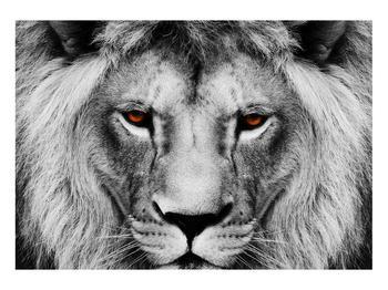 Černobílý obraz lva (K011390K10070)