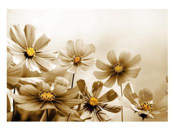 Obraz květů (K011484K10070)