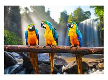 Obraz papoušků (K011994K10070)