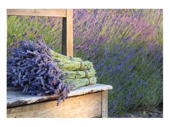 Obraz levandulových svazků (K012032K10070)