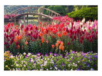 Obraz kvetín (K012048K10070)